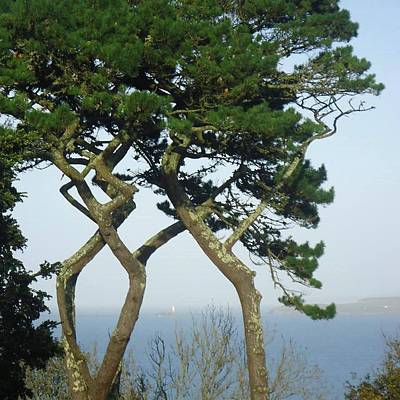 Through The Trees To Godrevy From St. Ives Art Print