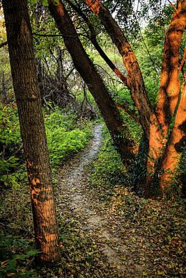 Photograph - Through The Woods by Scott Bean