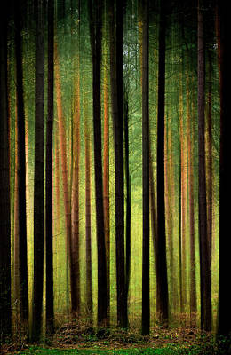 Browm Digital Art - Through The Woods by Svetlana Sewell