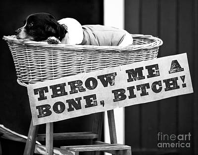 Photograph - Throw Me A Bone Bitch by John Rizzuto