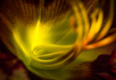 Photograph - Thru-lit Petals by Rikk Flohr