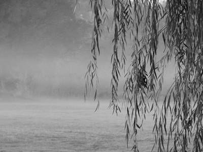 Photograph - Thru The Willow On A Foggy Morning by Virginia Kay White