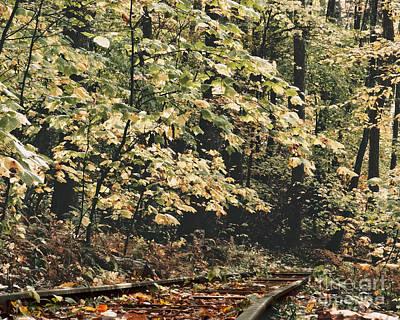 Photograph - Thru The Woods by Dawn Gari