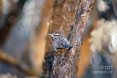 Photograph - Thrush by Alycia Christine