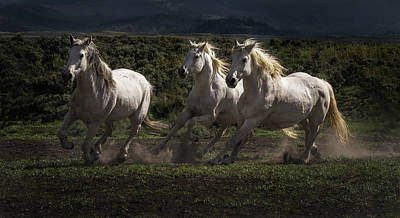 Loping Photograph - Thundering Trio by Elaine Haberland