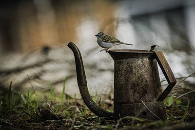 Sparrow Photograph - Thursday Morning by Everet Regal