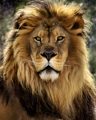 Lion Face Photograph - Thy Kingdom Come by Linda Mishler
