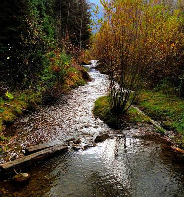Fall Photograph - Tibble Fork Creek by Trinket's  Legacy
