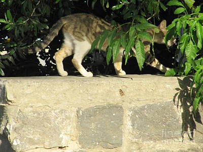 Photograph - Tiberius Cat #1 by Donna L Munro