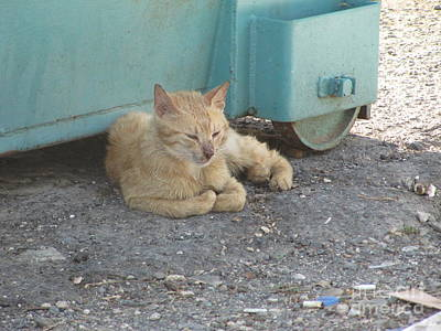 Photograph - Tiberius Israel Cat #3 by Donna L Munro