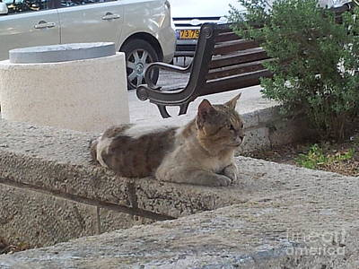 Photograph - Tiberius Israel Cat #4 by Donna L Munro