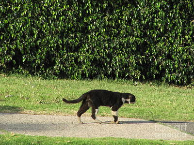 Photograph - Tiberius Israel Cat #5 by Donna L Munro