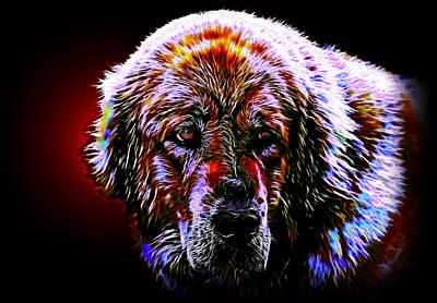 Puppies Mixed Media - Tibetan Mastiff by Denis Bajan