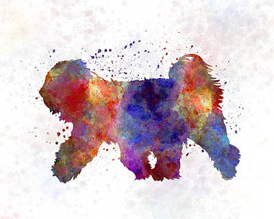 Tibetan Terrier In Watercolor Art Print by Pablo Romero