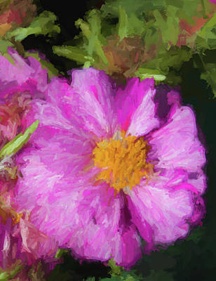 Photograph - Tickle Me Pink Moss Rose by Kathy Clark