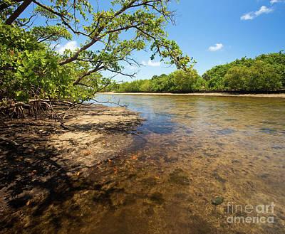 Tidal Mangrove Estuary - Von D Mizell Eula Johnson State Park Art Print