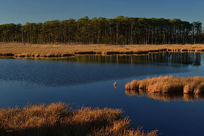Photograph - Tidal Marsh - Maryland Eastern Shore by Dana Sohr
