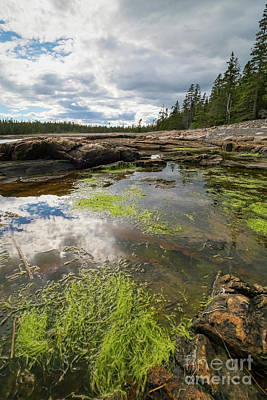Photograph - Tidal Pool, Southwest Harbor, Maine  #30023 by John Bald