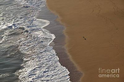 Tidal Waves And Seagull In Lagoa Art Print