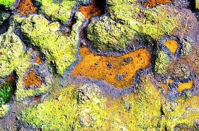 Photograph - Tide Pool 23656 by Jerry Sodorff