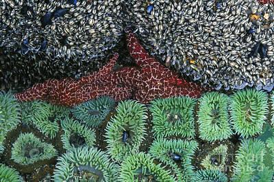 Tide Pool Art Print by Jim Zipp