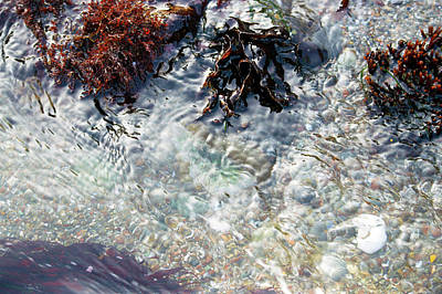 Photograph - Tide Pool Ripple by Brent Dolliver