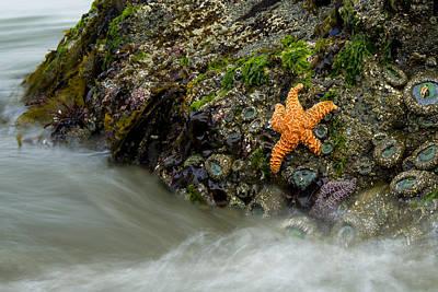 Photograph - Tidepool At Endert's Beach by Joe Doherty