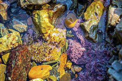 Photograph - Tidepool Playa De Campiecho by Judith Barath