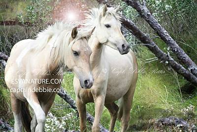 Photograph - Tidewater Princess And Lorna Dune In Maritiem Forest Art by Captain Debbie Ritter
