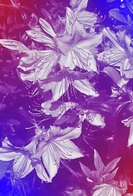 Photograph - Tie-dye Azaleas by Angie Tirado