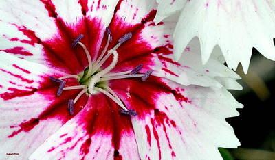 Photograph - Tie-dye Pallette by Andrea Platt