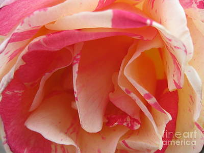 Photograph - Tie-dye Rose by Karen Sydney