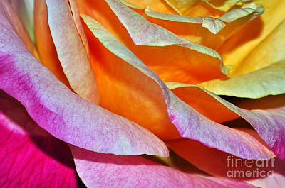 Gold Roses Photograph - Tiered Petals by Kaye Menner