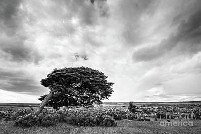 Photograph - Tierra Del Fuego by Olivier Steiner