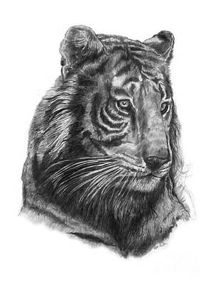 Animals Drawings - Tiger 1 by Scott Parker