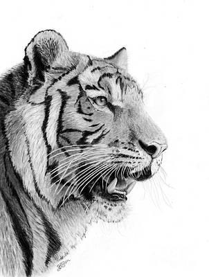 Drawing - Tiger 1 by Sheryl Elen