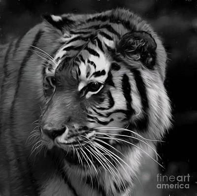 Photograph - Tiger 10418 by Ray Shrewsberry