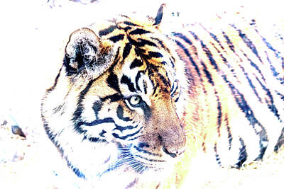 Photograph - Tiger Abstract by Kate Brown