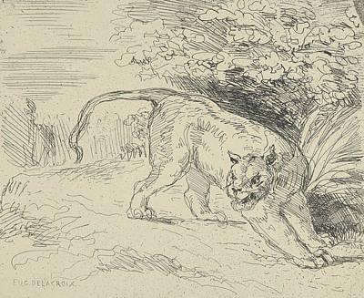Drawing - Tiger At A Standstill by Eugene Delacroix