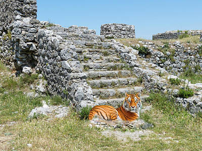 Photograph - Tiger At The Ruins by Ericamaxine Price
