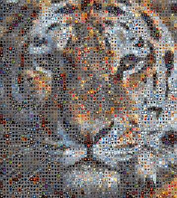 Grid Of Heart Photograph - Tiger by Boy Sees Hearts