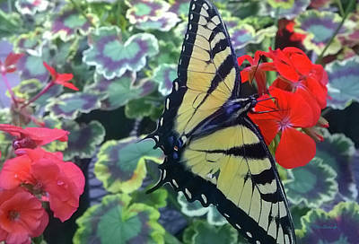 Photograph - Tiger Butterfly 2 by Duane McCullough
