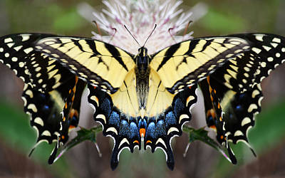 Photograph - Tiger Butterfly Construct by rd Erickson
