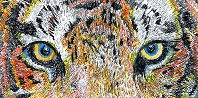 Animals Drawings - Tiger by Matt Lovins by David Lovins