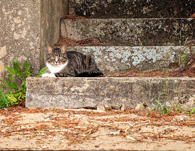 Photograph - Tiger Cat On Stairs by Donna Doherty