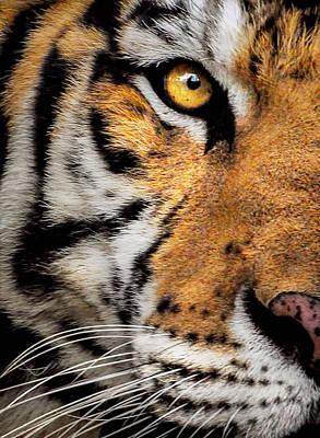 Asian Tiger Digital Art - Tiger by Christina Skibicki
