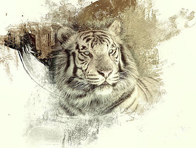 Photograph - Tiger by Clare VanderVeen