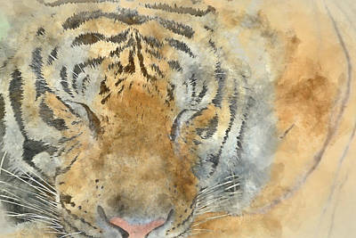 Photograph - Tiger Close Up - Digital Art Watercolor by Brandon Bourdages