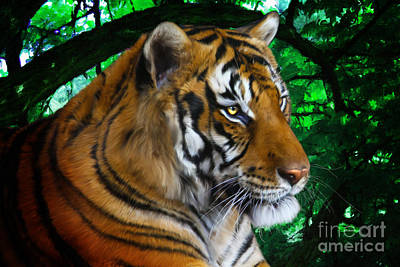 Tiger Contemplation Art Print