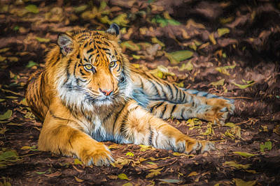 Photograph - Tiger Cub      Pr2 by Ray Warren